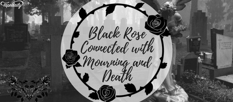 Black Rose Connected with Mourning and Death