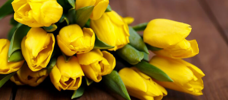 What Does A Yellow Tulip Mean