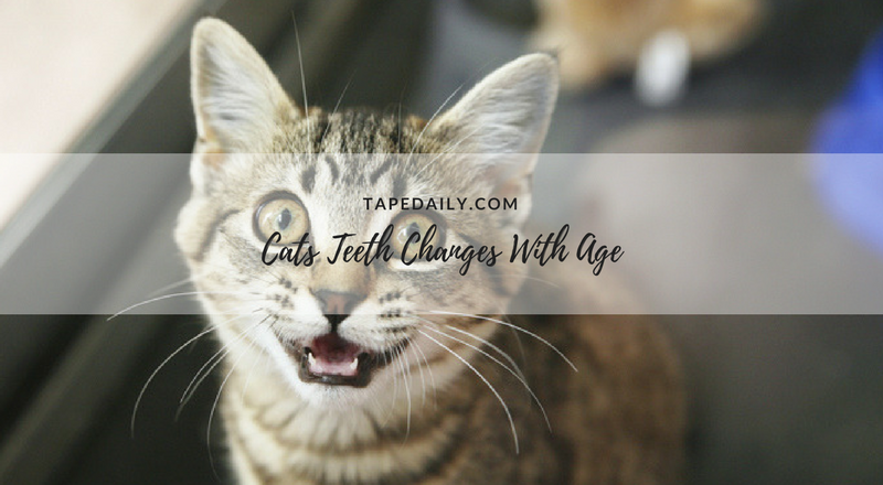 cats age change
