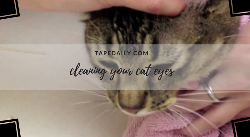 cleaning your cat eyes