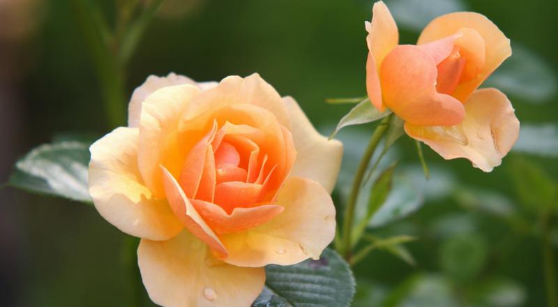 What is the Main Function of Flowers?