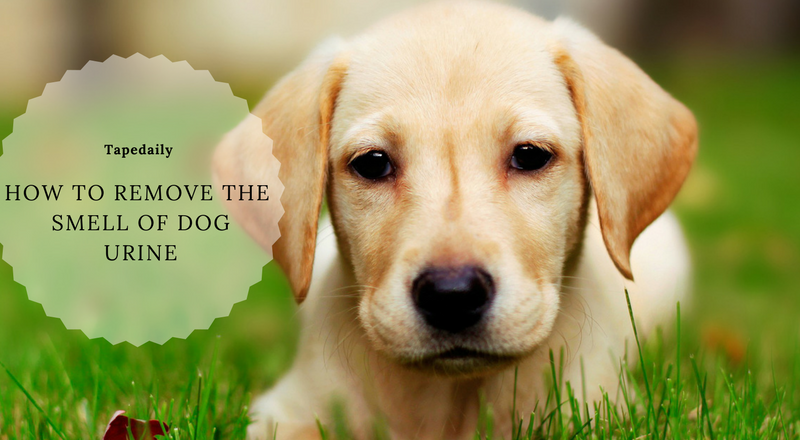 How to Remove the Smell of Dog Urine