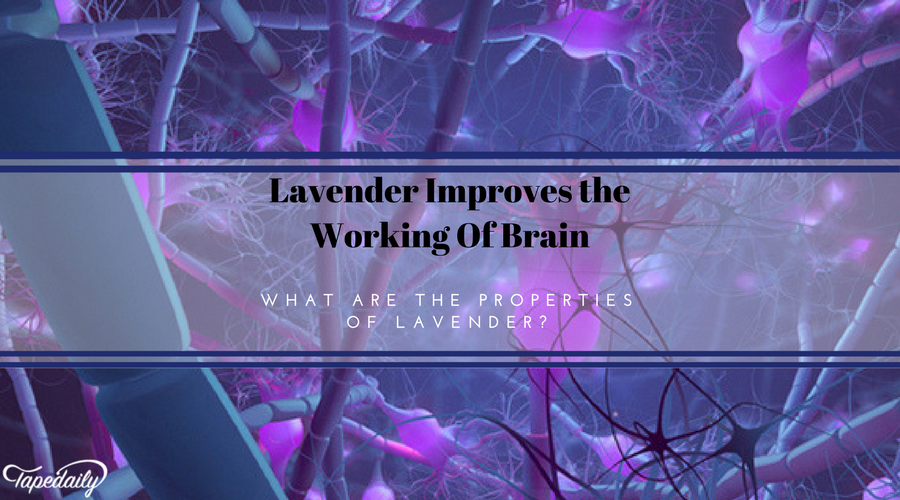 Lavender improves working of brain