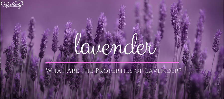 What Are the Properties of Lavender