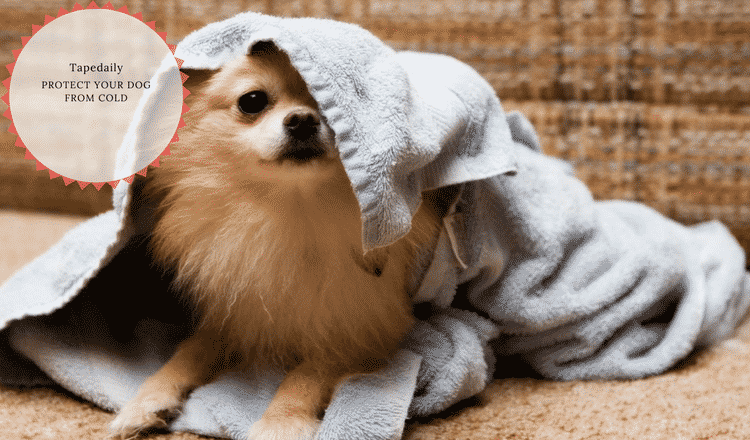 Protect your dog from cold