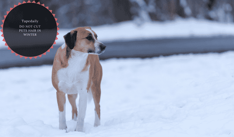 do not cut dogs hair in cold weather