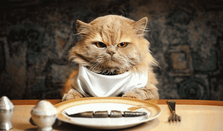 How Much To Feed A Cat? Some Mistakes To Avoid While Feeding Your Kitty