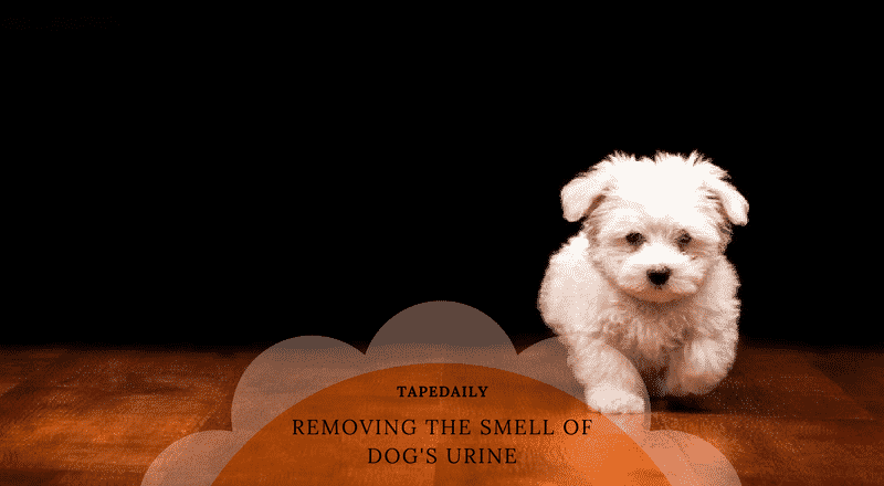 Removing the smell of dog's urine