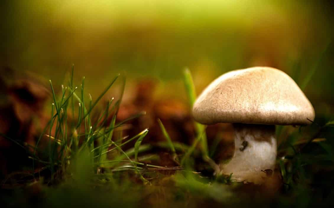 How to Preserve Mushrooms?