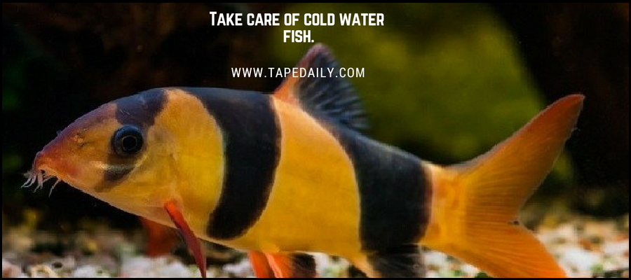 Cold Water Fish
