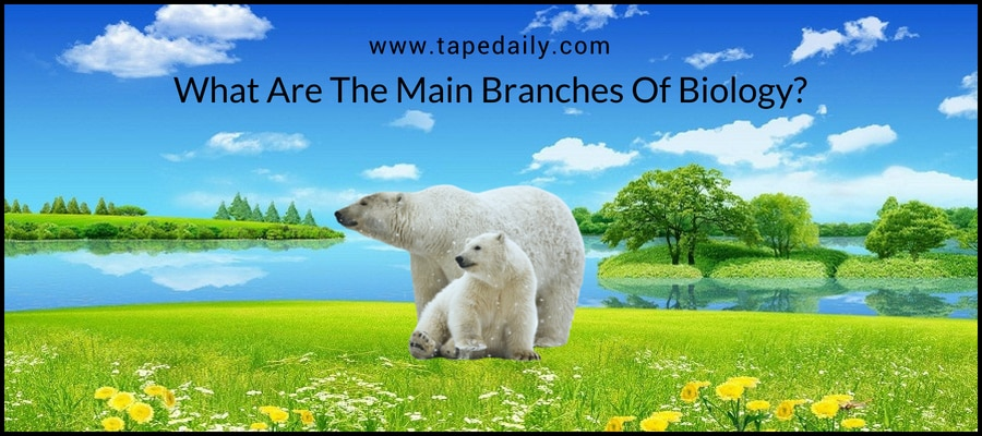 What Are The Main Branches Of Biology