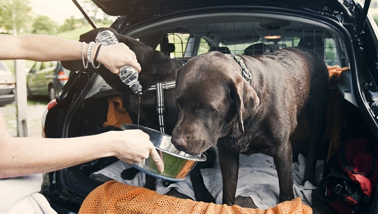 How To Know If Your Dog Has Dehydration?