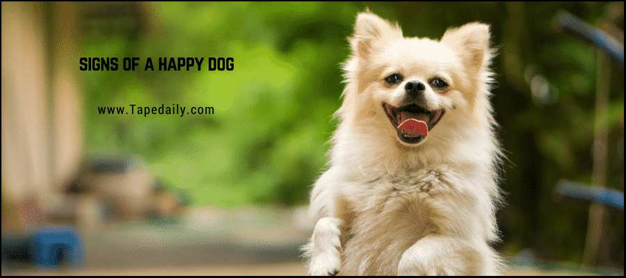 Signs of happy dog