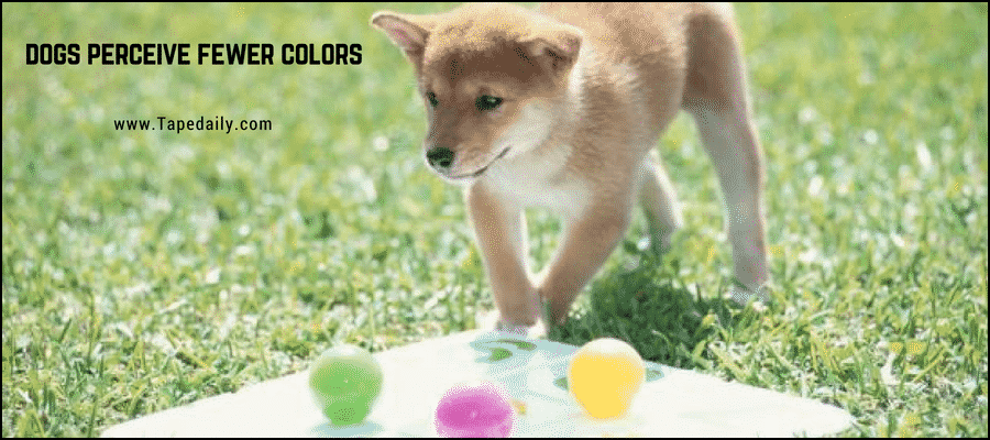 Dogs Perceive Fewer Colors
