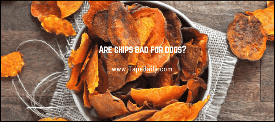 Are chips bad for dogs?