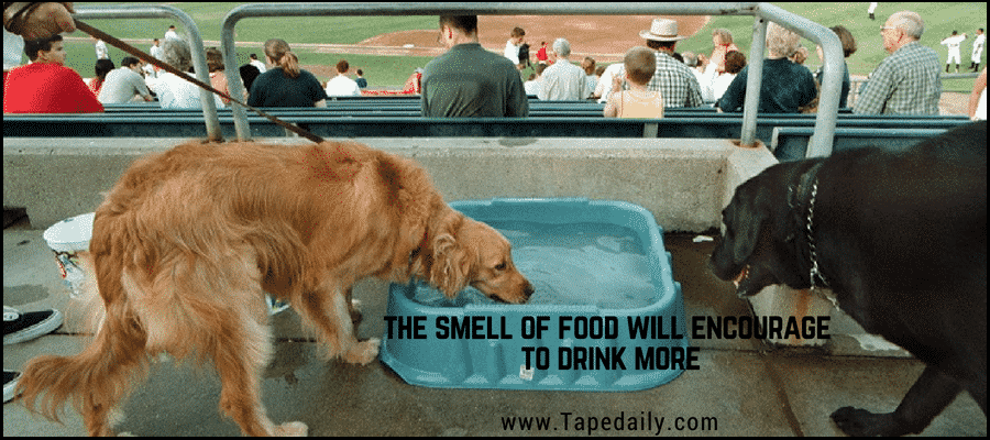 Smell Of food motivates dog to drink water