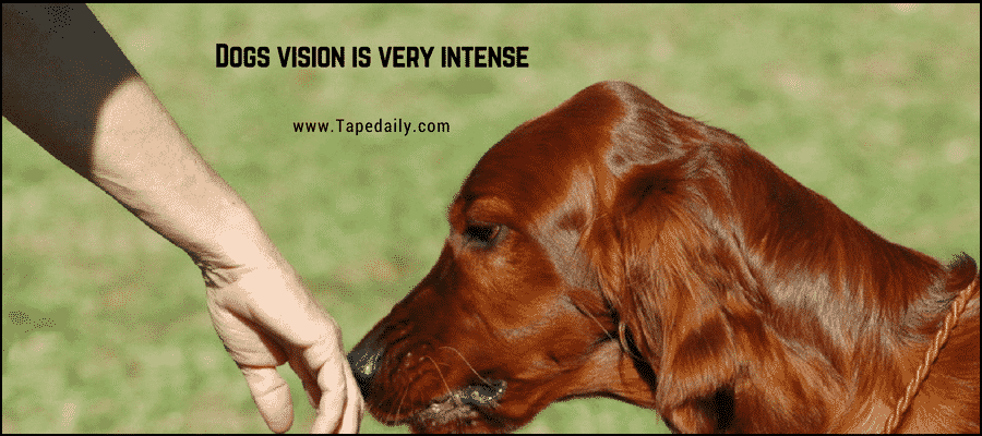Dogs Vision is very intense