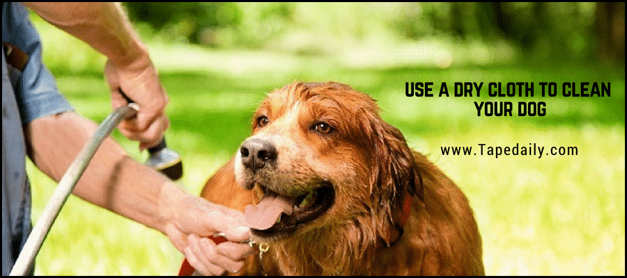Use a cloth to clean your pet
