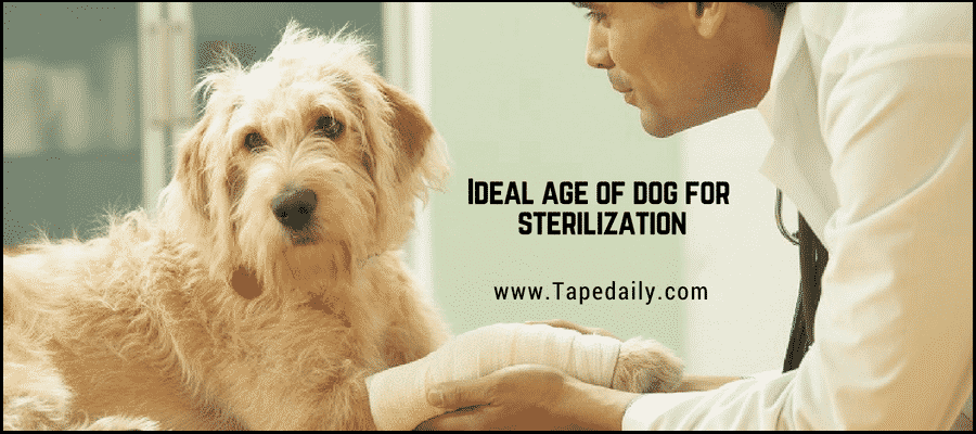 Ideal age of dog for sterilization