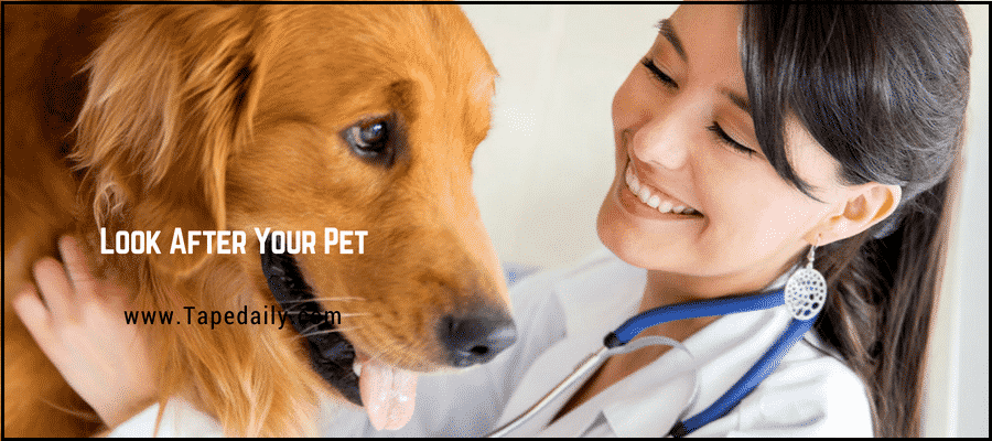 Take your pet to vet