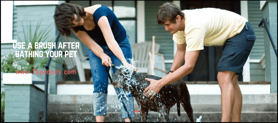 Use a dry shampoo to clean your pet