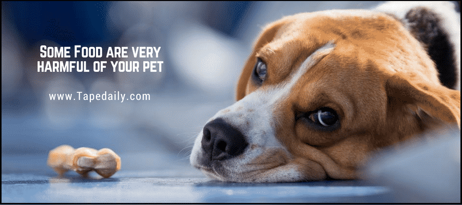 Some Food are very harmful for pet