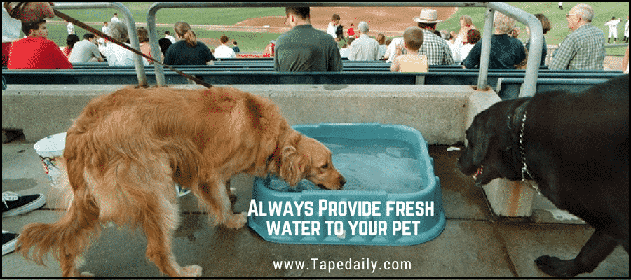Provide fresh water to your pet