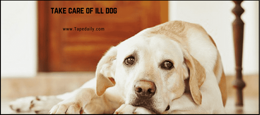 Take Care of ill dog