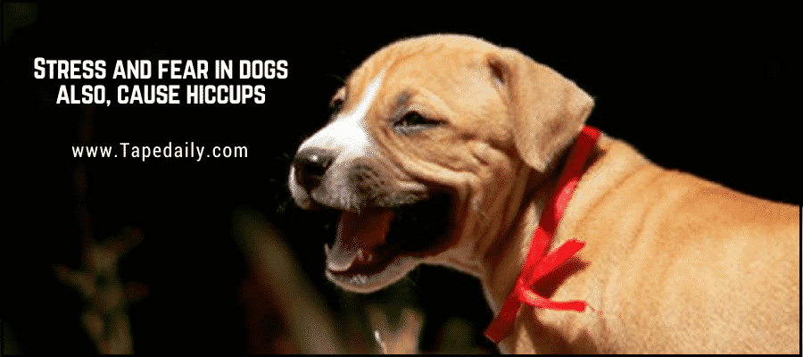 some breed of dogs are more prone to hiccups