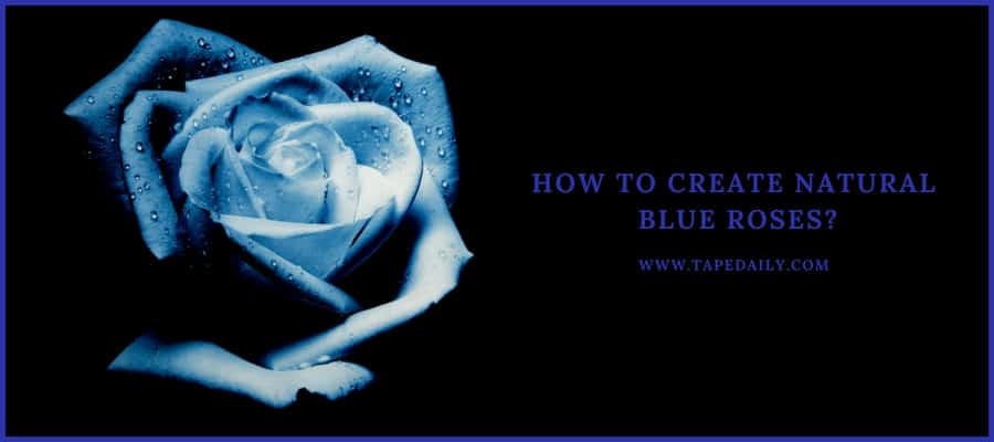 creating blue roses