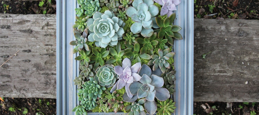 How To Make A Living Wall With Succulents?