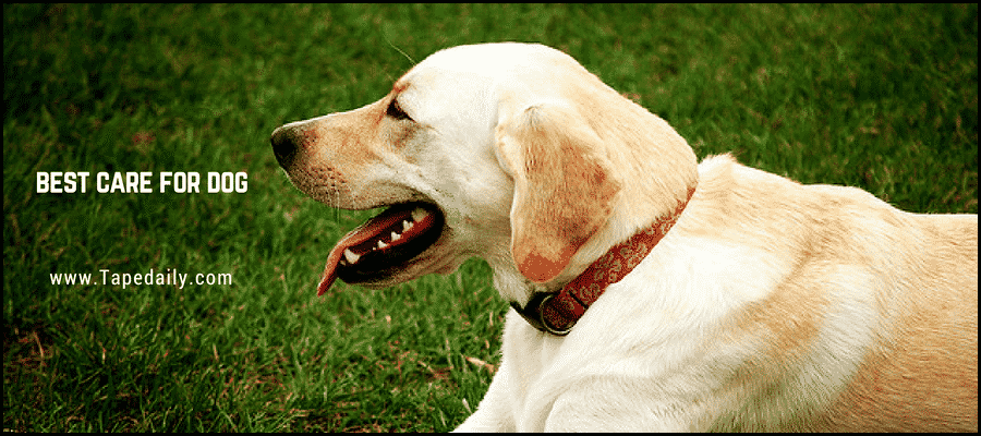 Best care for dogs in holiday