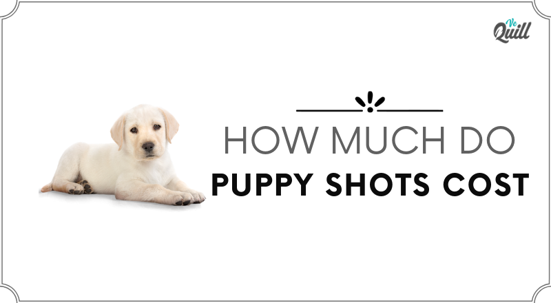 Puppy Shots- Which Shots Does Your Puppy Need- Vaccination Schedules