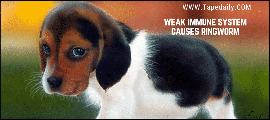 dog ringworm can damage various tissues