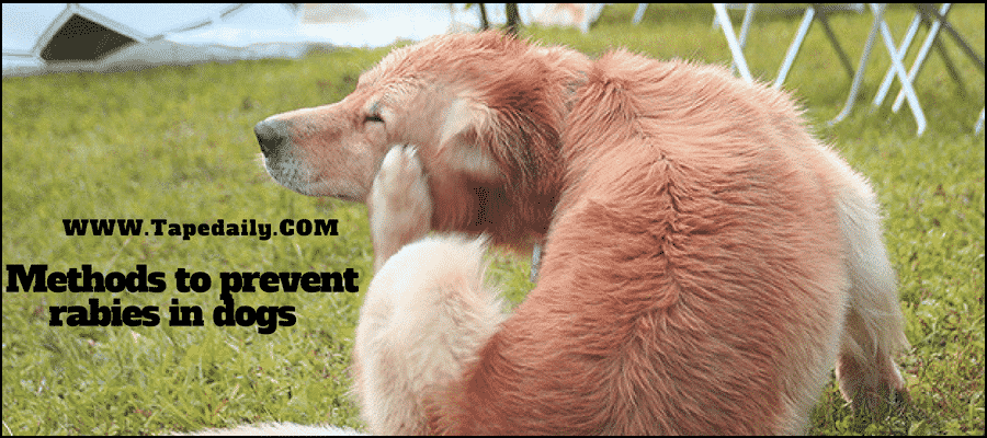 Method to prevent rabies