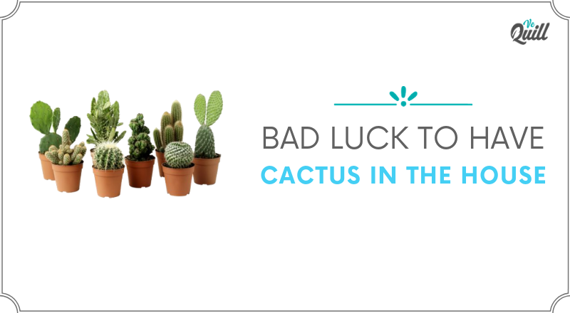 Bad Luck To Have A Cactus In The House