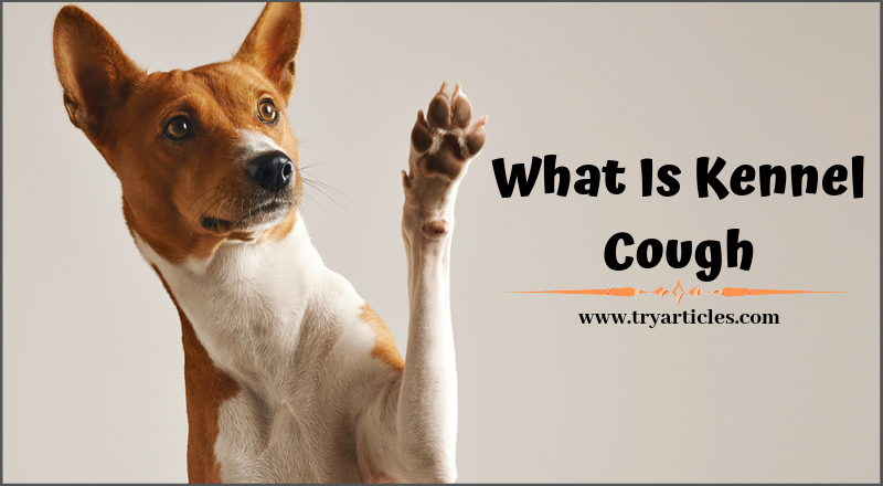 what is kennel cough
