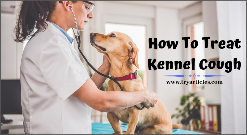 kennel cough treatment