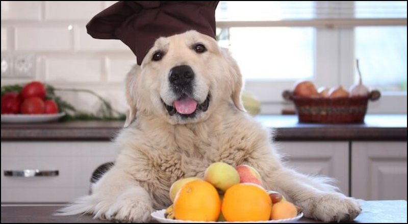 Can dogs have oranges