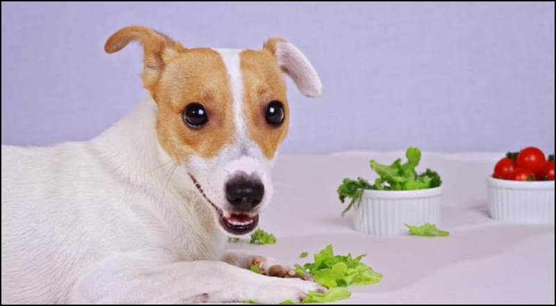 Dogs love lettuce