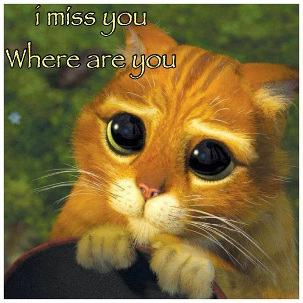 i miss you where are you