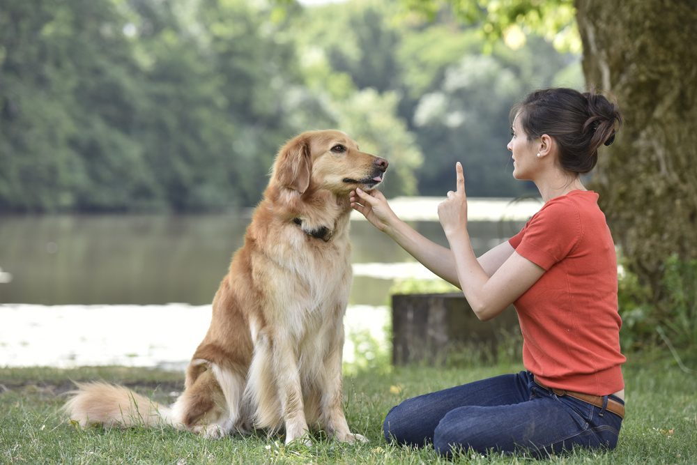 How To Stop A Dog From Barking at Night, People & Other Situations?