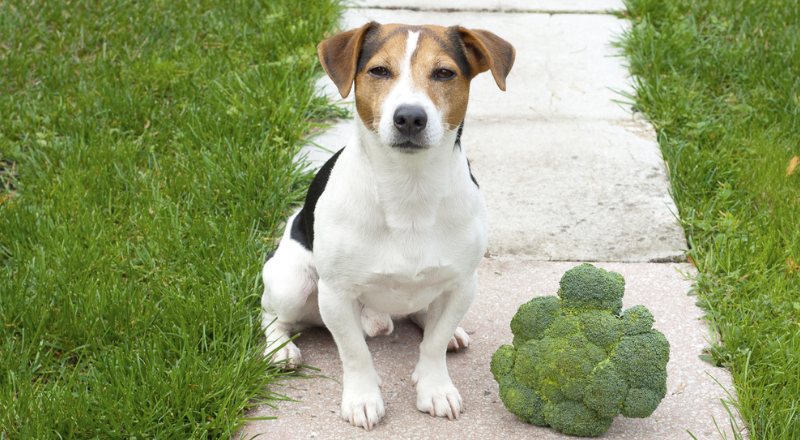 Broccoli for dogs
