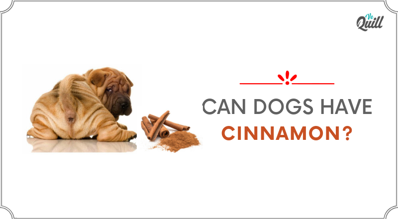 Can Dogs Have Cinnamon