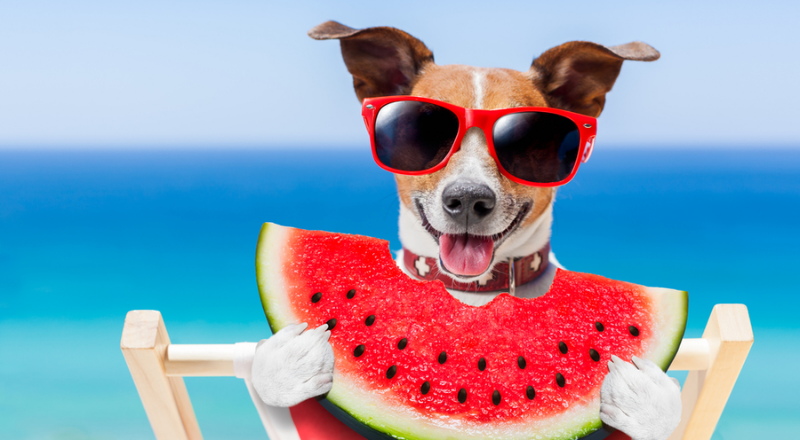 Can dogs have cantaloupe