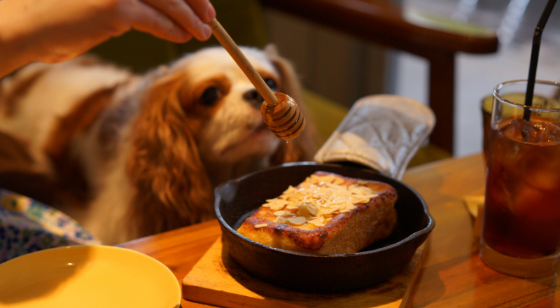 Can dogs have honey