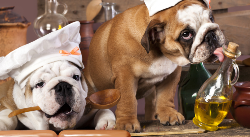 Dog Food Advisor: Top 10 Best And Worst Dog Food Reviews 2019