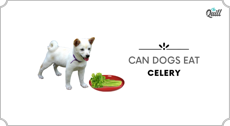 can dogs have celery