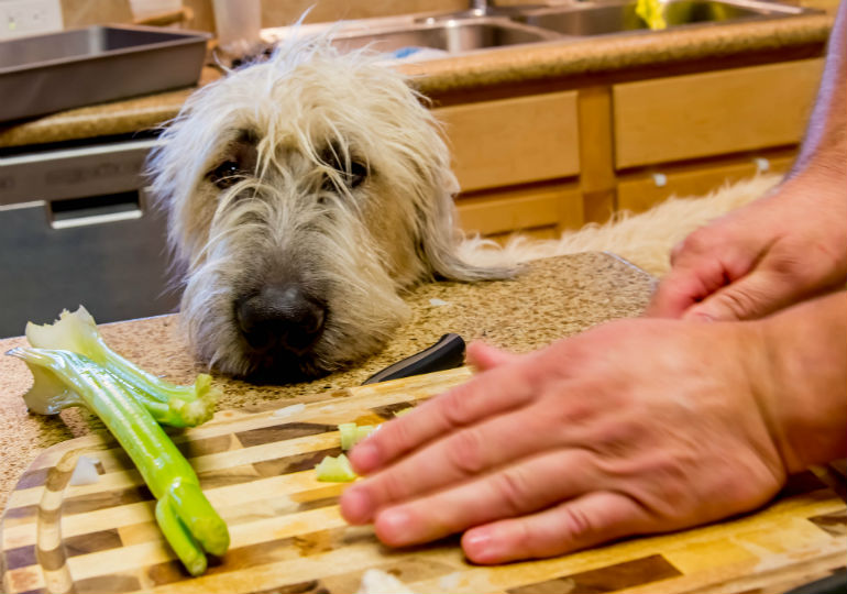 what vegetables can dogs eat