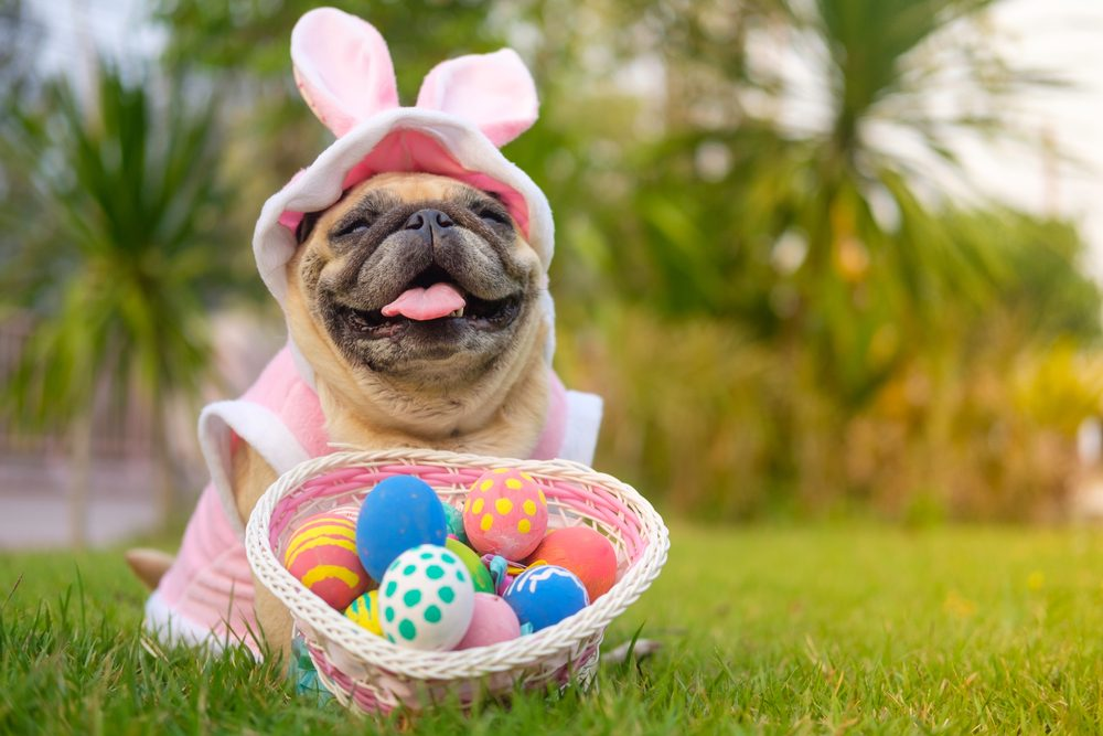 Can Dogs Eat Raw Eggs Or Hard Boiled Eggs?